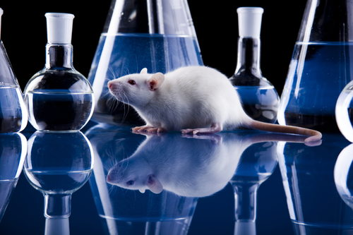 experimentos animales